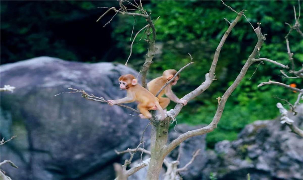 神农架猕猴乐园