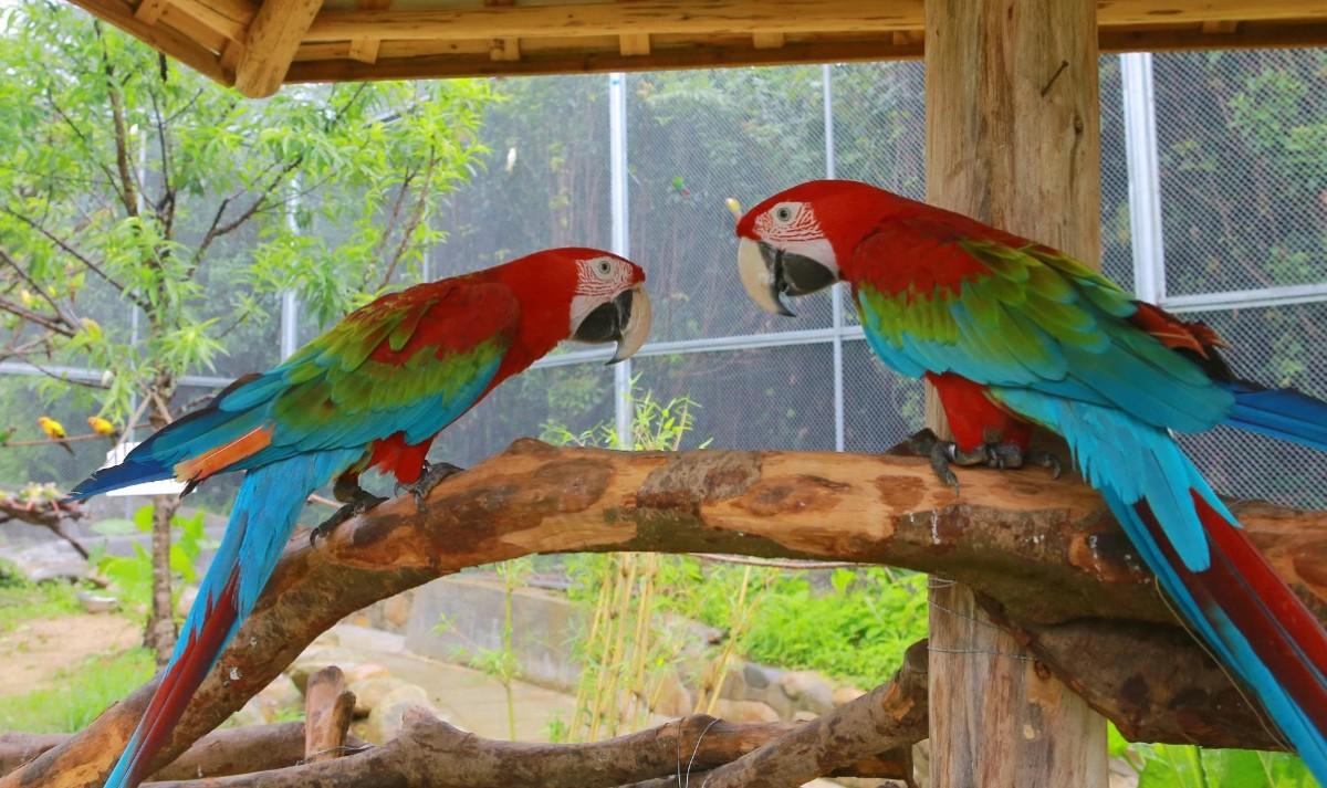 广东大虫生态动物乐园