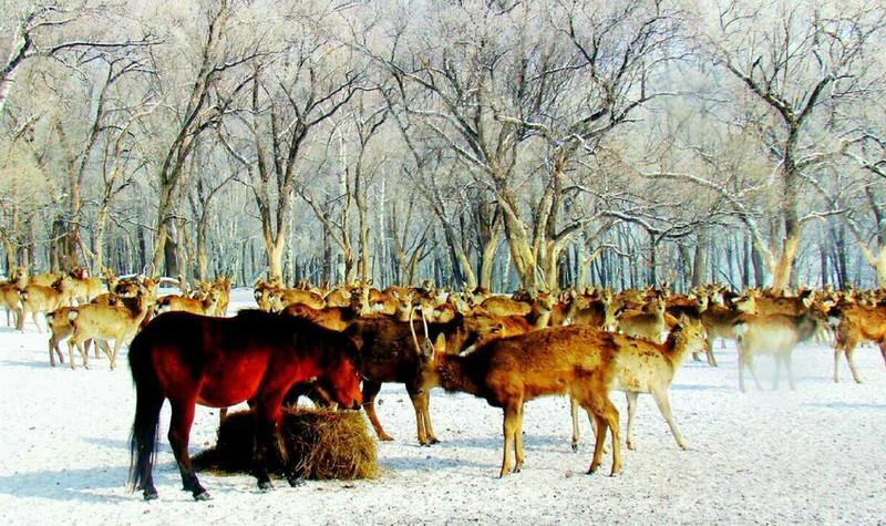 森工平山神鹿旅游区