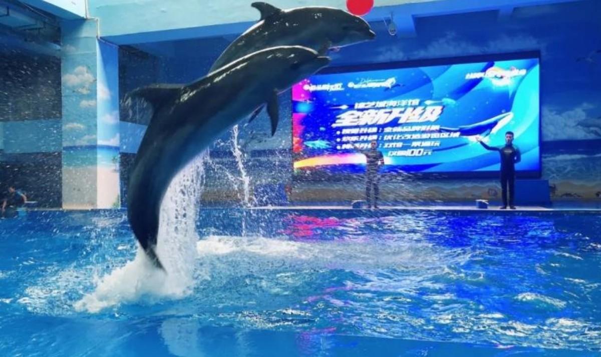 郑州锦艺城海洋馆+海豚馆好玩么 郑州锦艺城海洋馆门票