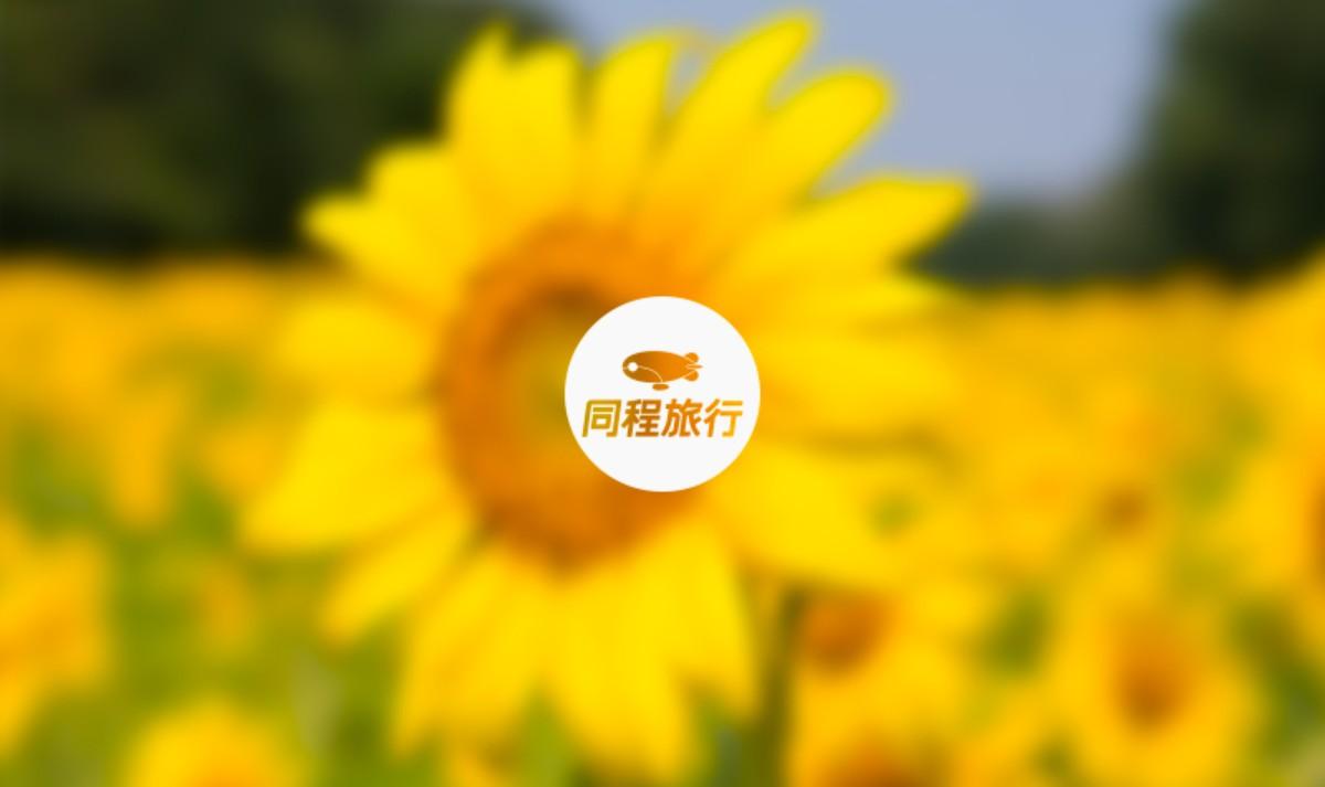 金甲月季园